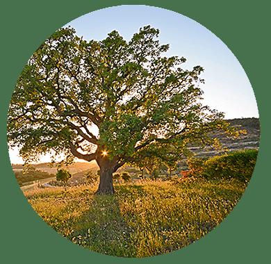 Ökologische und sozioökonomische Bedeutung